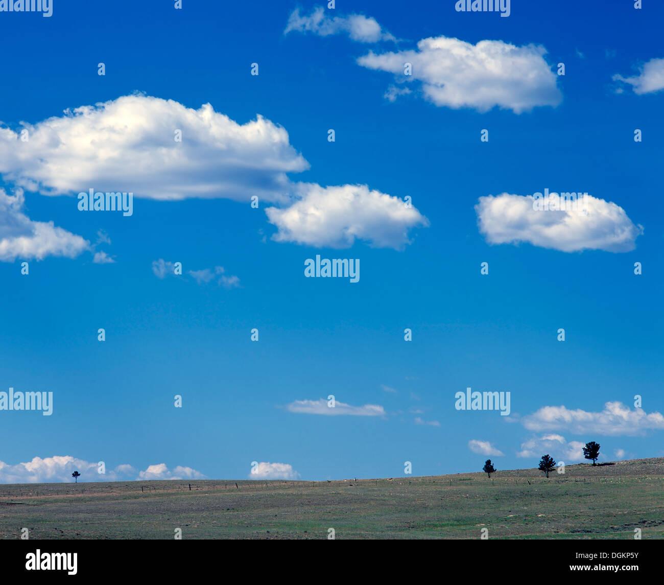 Eine Ansicht der isolierten Bäume unter freiem Himmel im San Isabel Wald. Stockbild