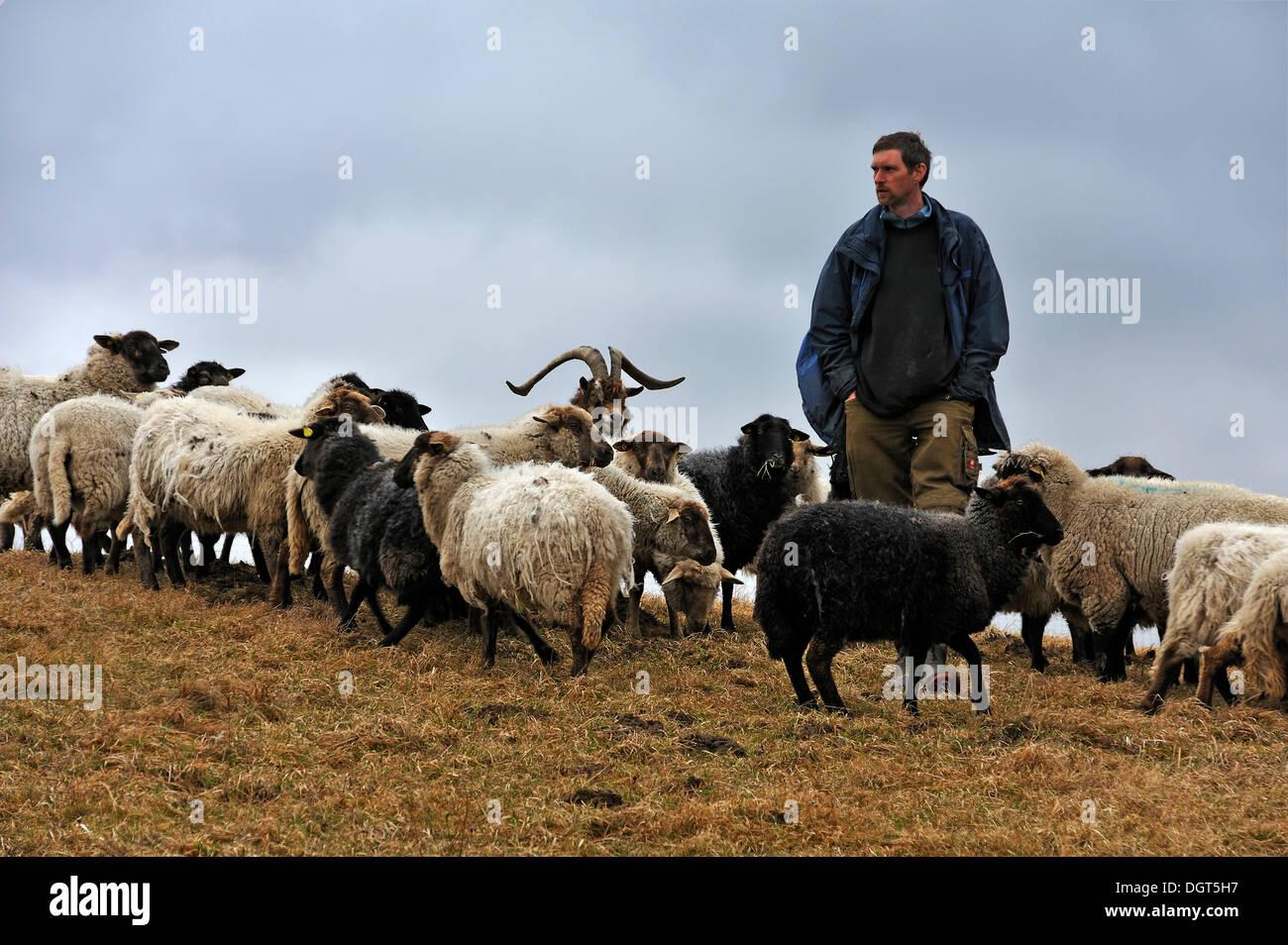 Jungbauer, die auf der Suche nach seine Schafe, eine Ziege am Zentrum, Kalkberg, Nesow, Mecklenburg-Western Pomerania, Stockbild
