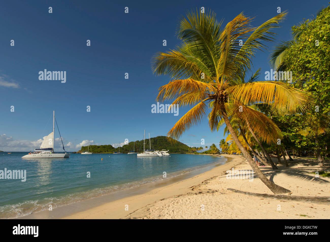 Caribbean Bay mit Palmen Bäume und Boote, Grenadinen, Karibik, Saint Lucia Stockbild