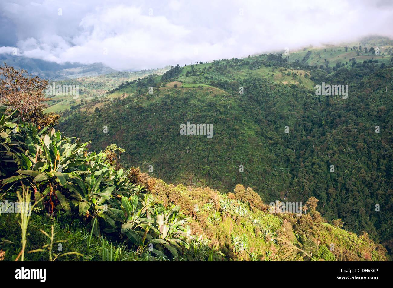 Ecuador als es ist: die Anden, den Himmel und Bananen Stockbild