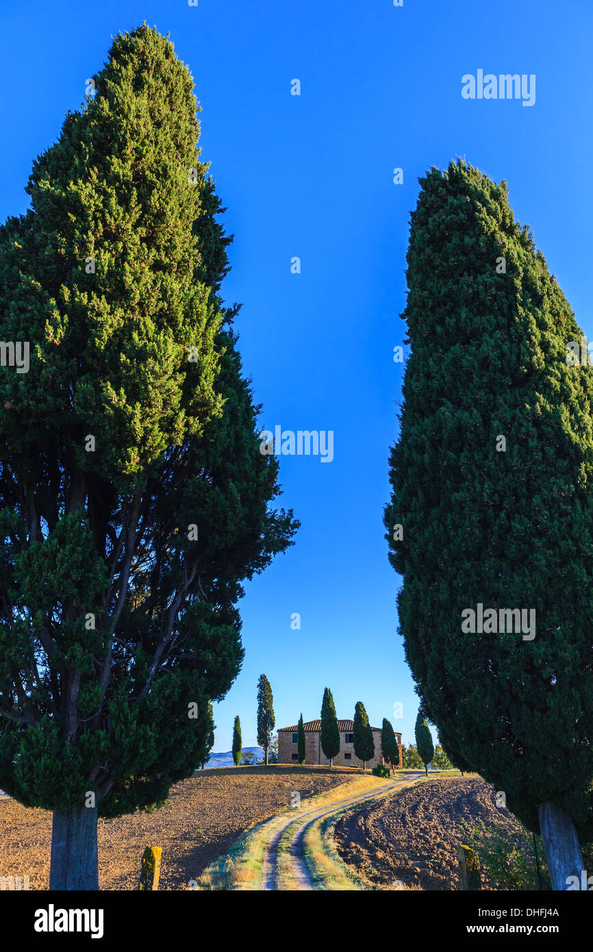 Haus mit den berühmten Zypressen im Herzen der Toskana, in der Nähe von Pienza, Italien Stockbild