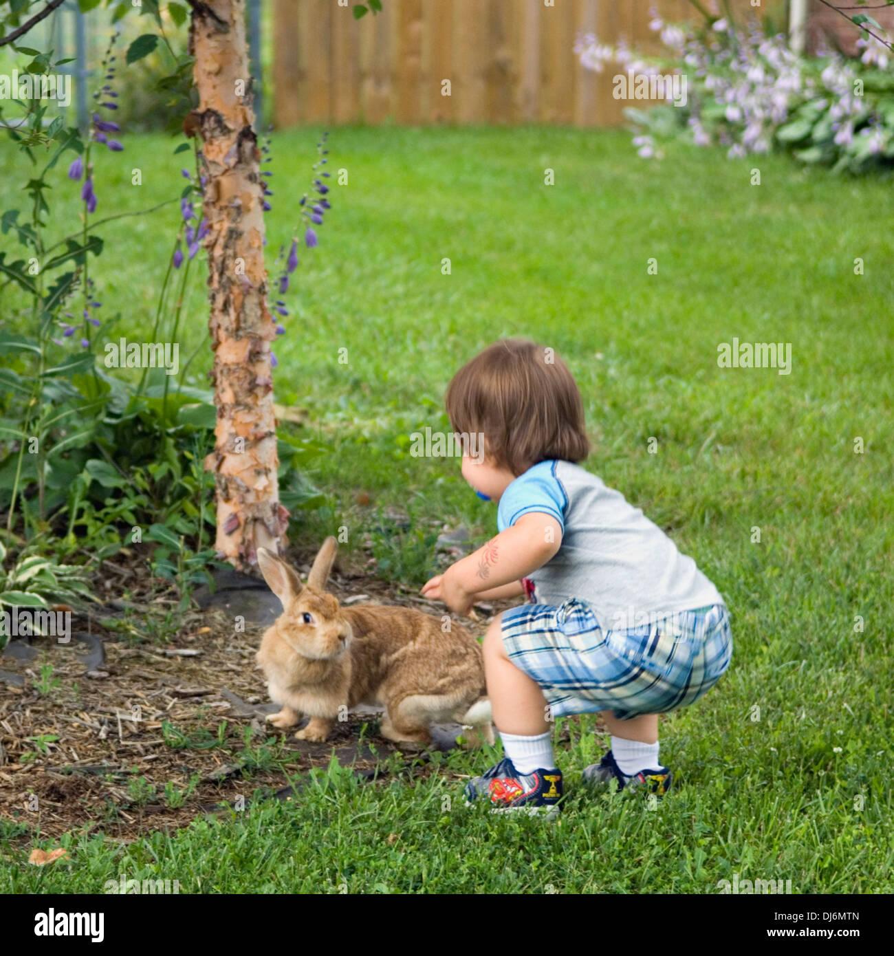 Kleinkind streicheln heimischen Bunny in einem Vorort Hof Stockbild