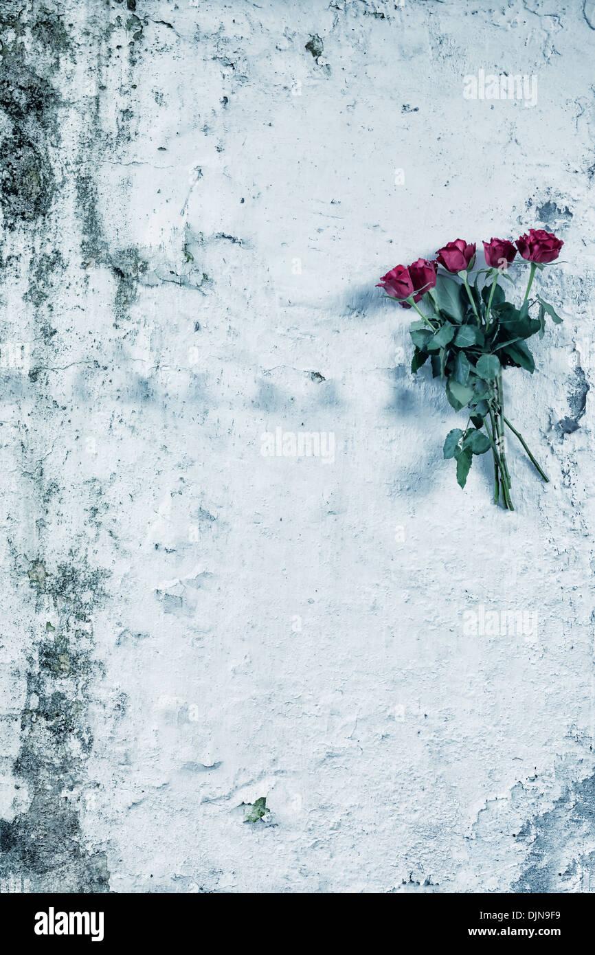 ein paar Rosen hängen an einer alten Mauer Stockbild