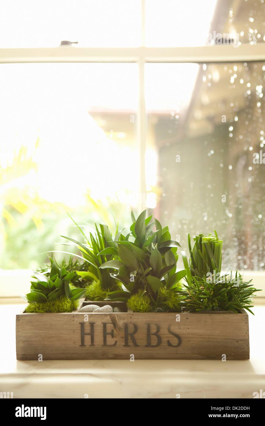 Vielzahl von grünen Kräutern wächst in Küche-Fenster-box Stockbild