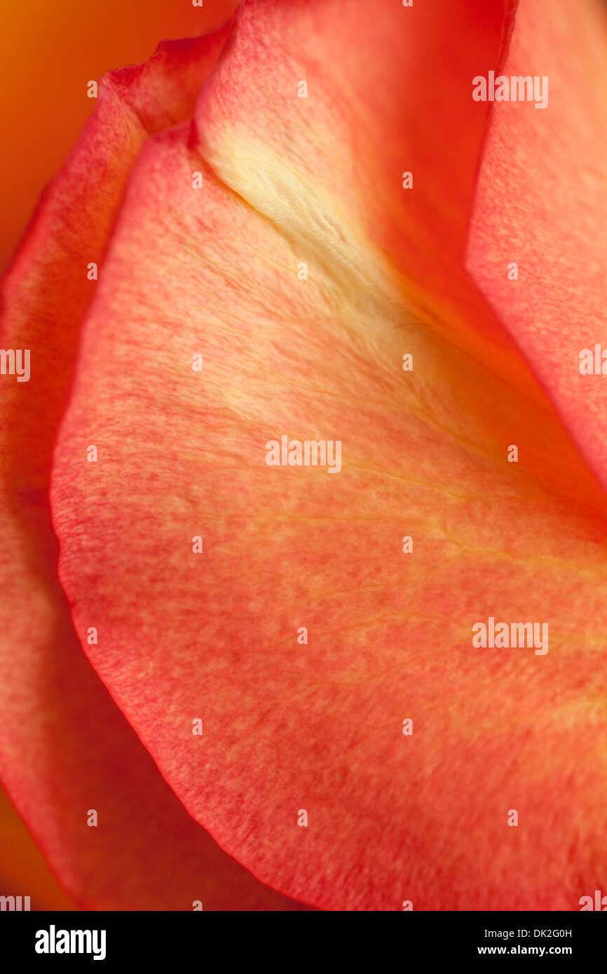 Nahaufnahme der hohen Winkel Ansicht Vollbild Detail orange Blüten Stockbild