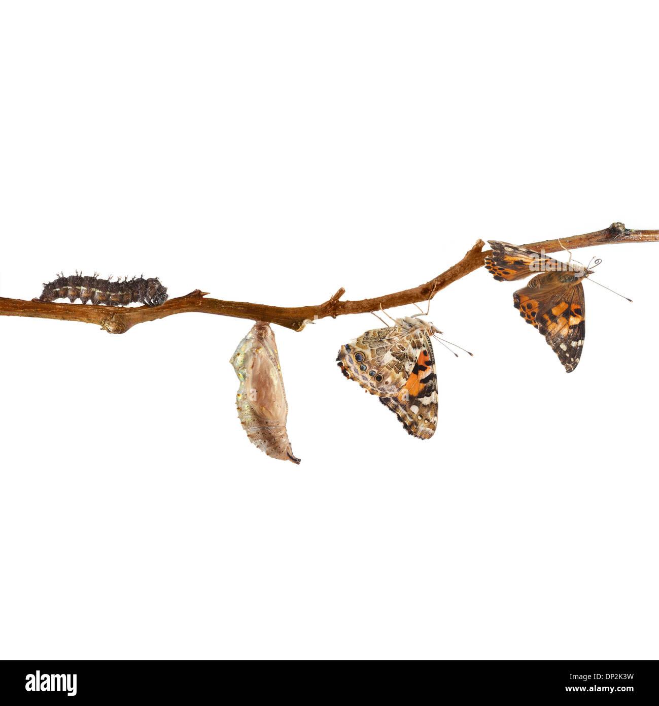 Niedlich Schmetterling Lebenszyklus Färbung Seite Zeitgenössisch ...