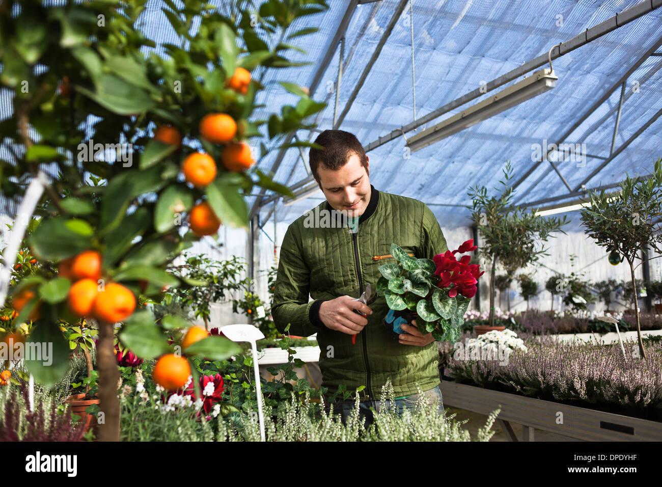 Gärtner im Gewächshaus Stockbild