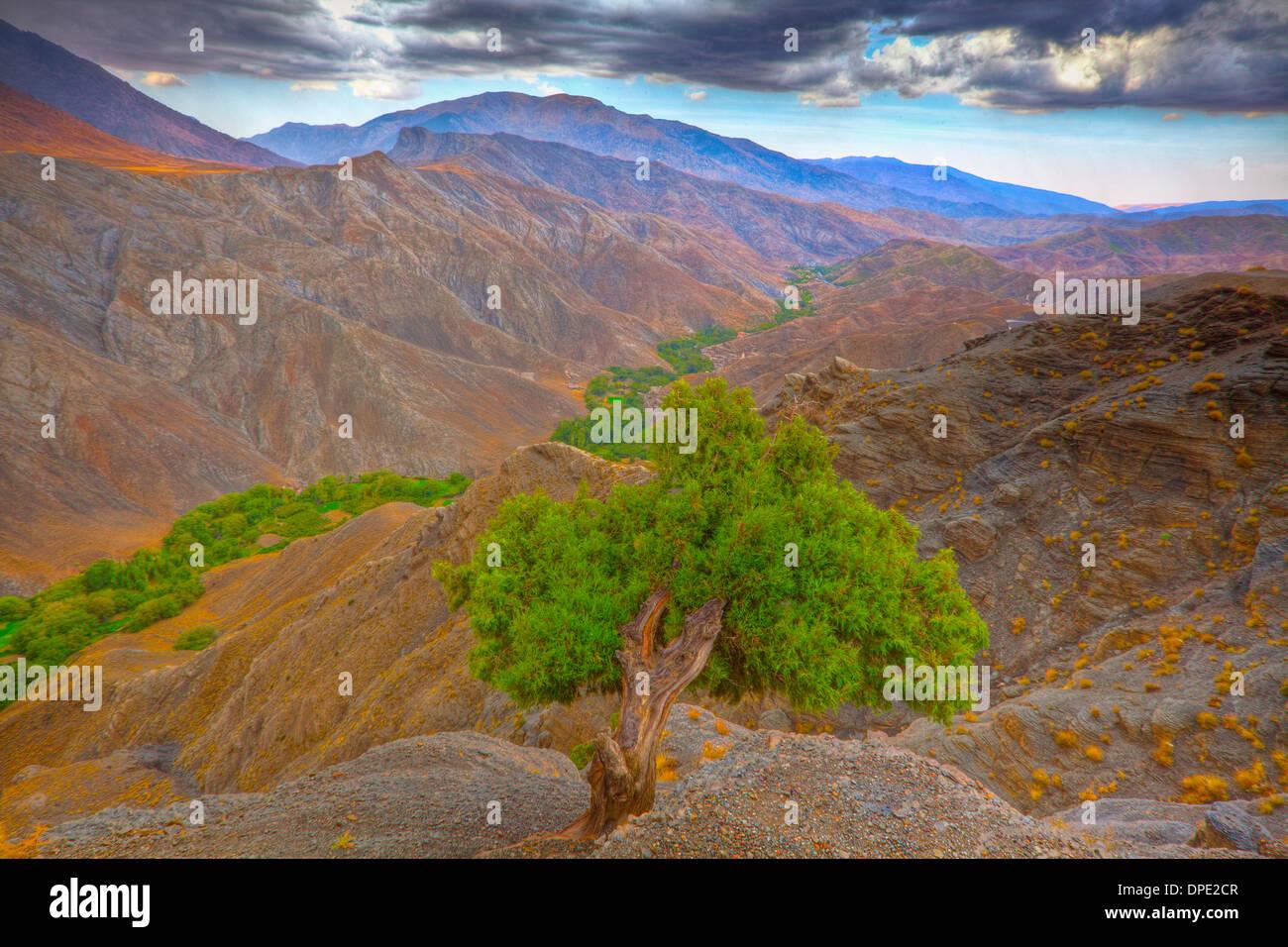 Atlas-Zeder im Atlas-Gebirge von Tizi n'Tichka Road, Marokko Cedrus Atlantica gesehen Stockbild