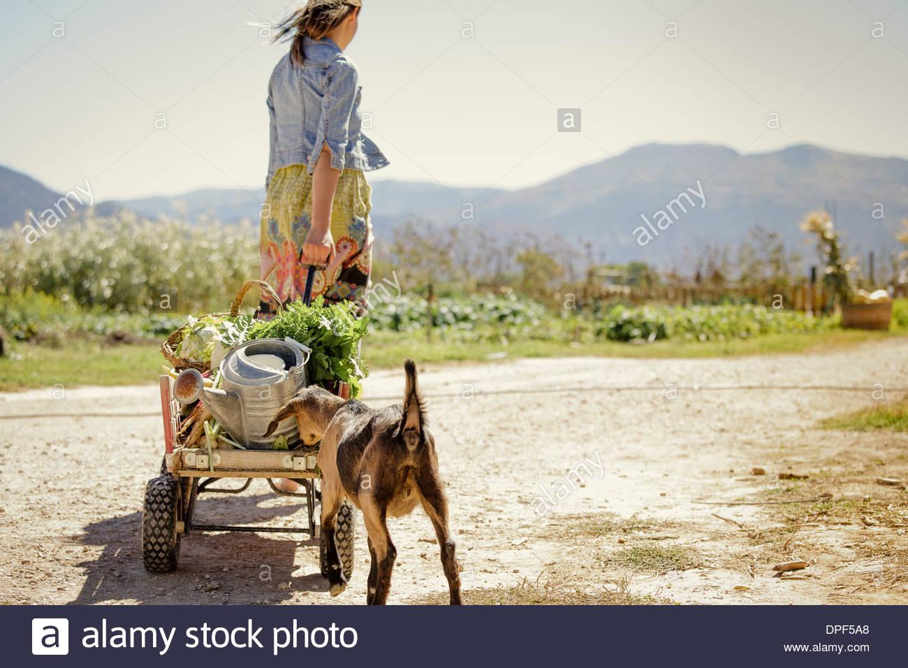 Junge Frau ziehen landwirtschaftlichen Produkten zum Warenkorb Stockbild