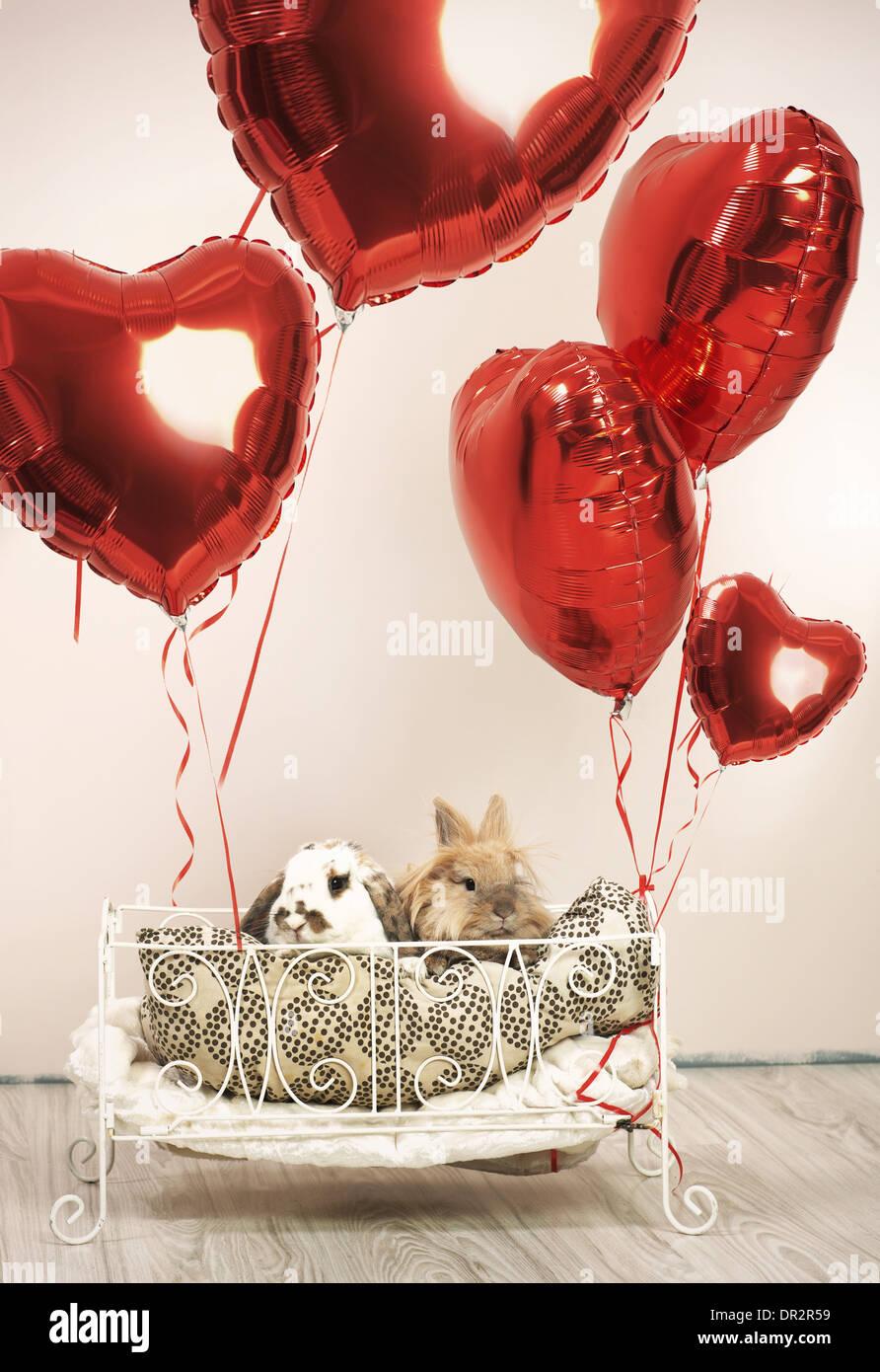 Zwei Kaninchen in Valentins Szene mit Luftballons Stockbild