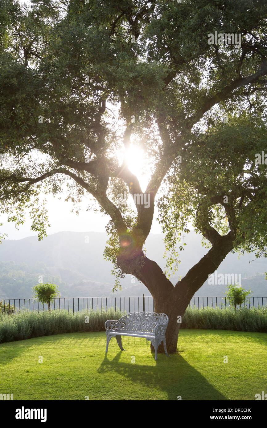 Bank unter Baum im ruhigen park Stockbild