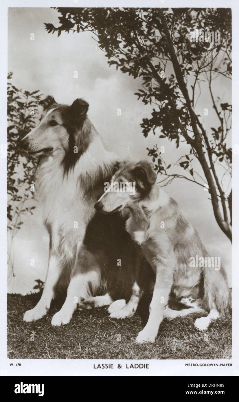 Lassie und Laddie - Filmstar Hunde Stockbild