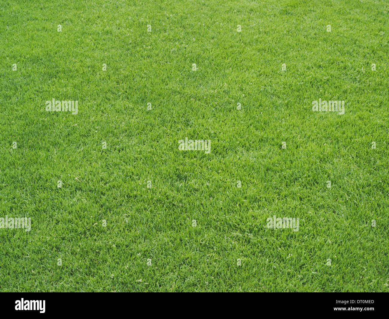 Washington USA grüne Rasenfläche auf einem Leichtathletik-Sportplatz Stockbild