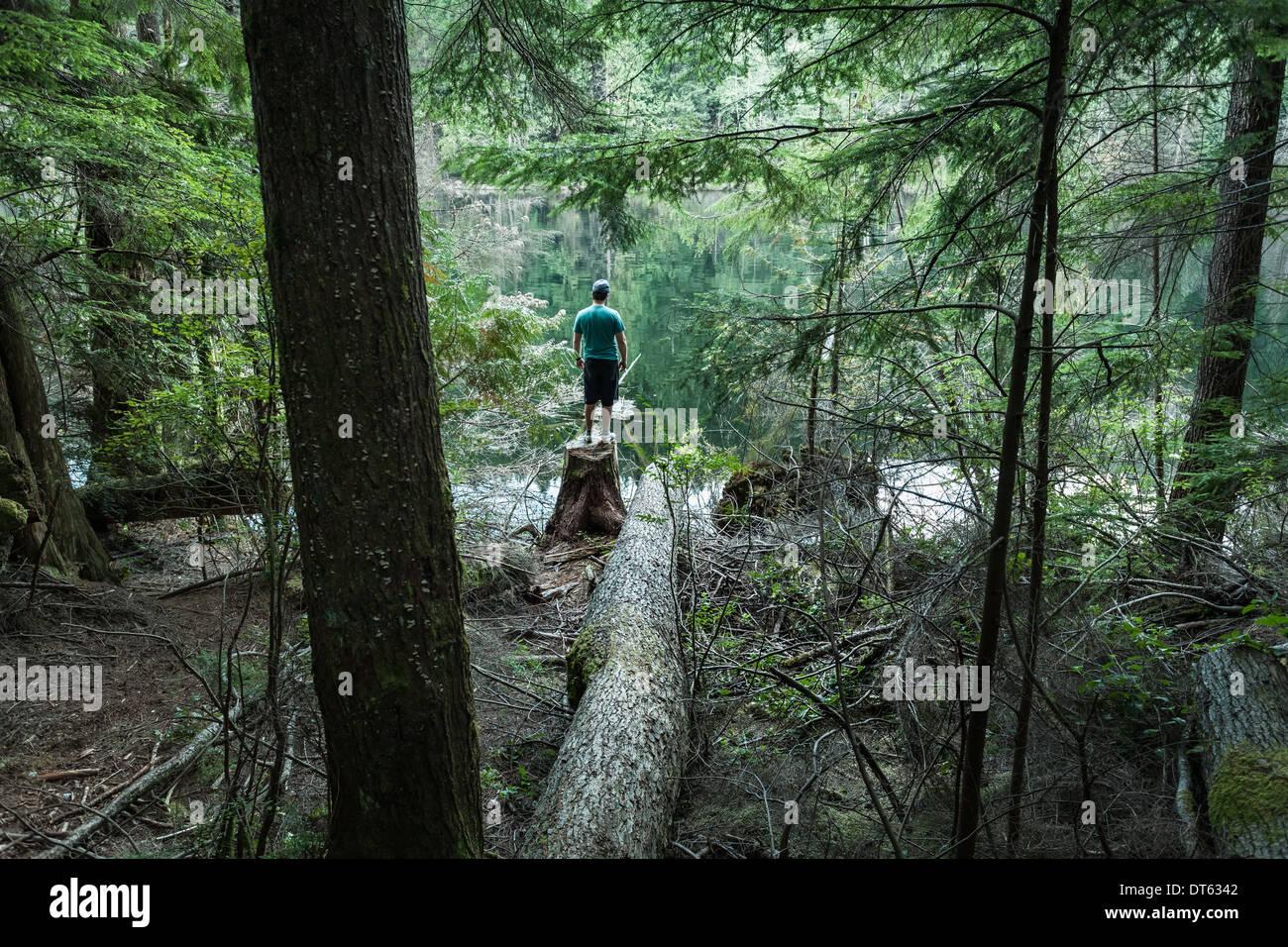 Mann im Wald, Buntzen Lake, British Columbia, Kanada Stockbild