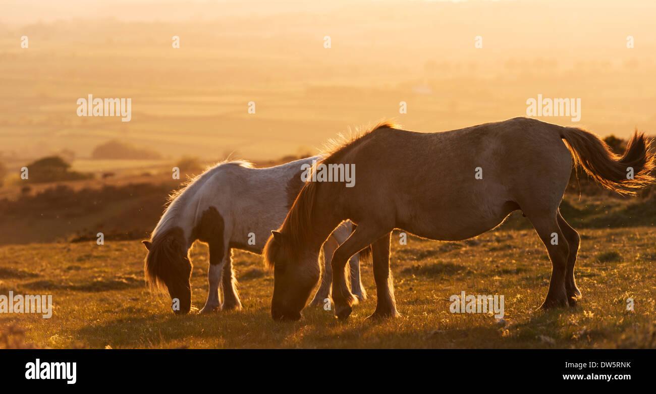Foal stockfotos foal bilder alamy for Roaming inghilterra