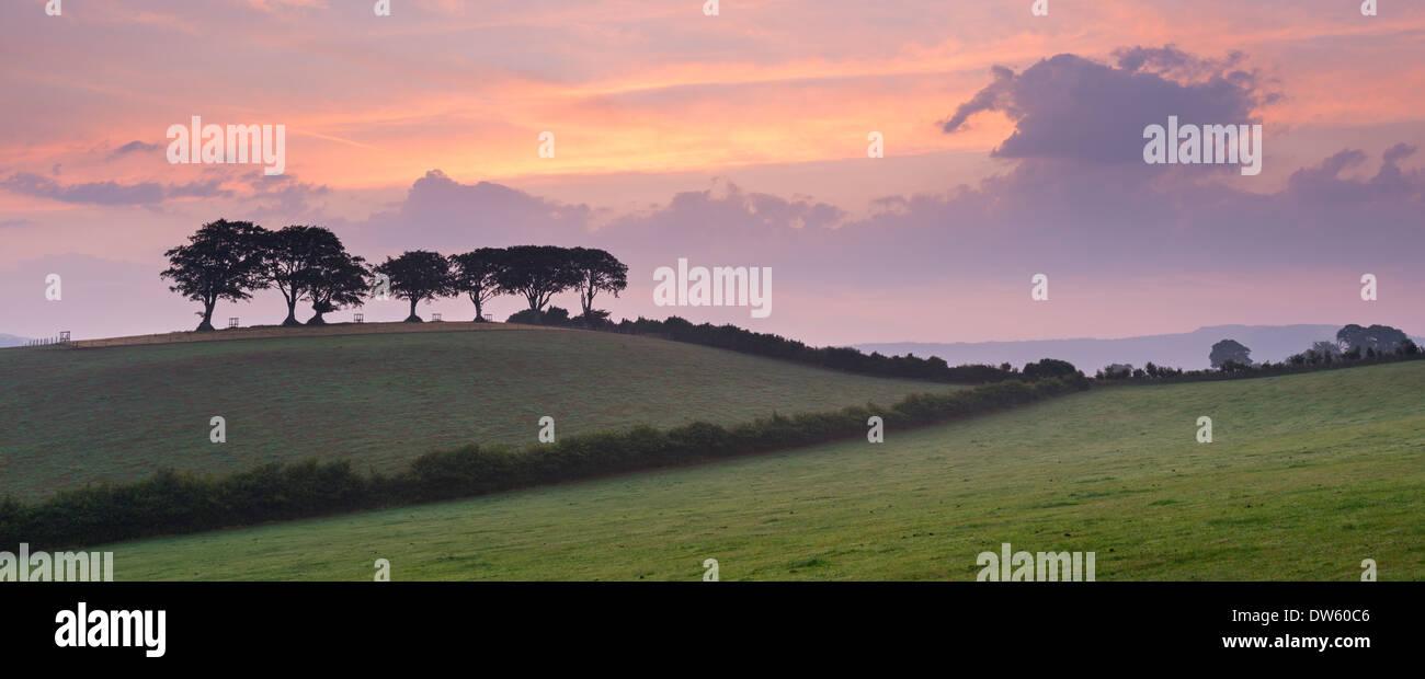 Kultige Exmoor Buche Bäume in der Dämmerung in der Nähe von Luccombe, Exmoor, Somerset, England. Stockbild