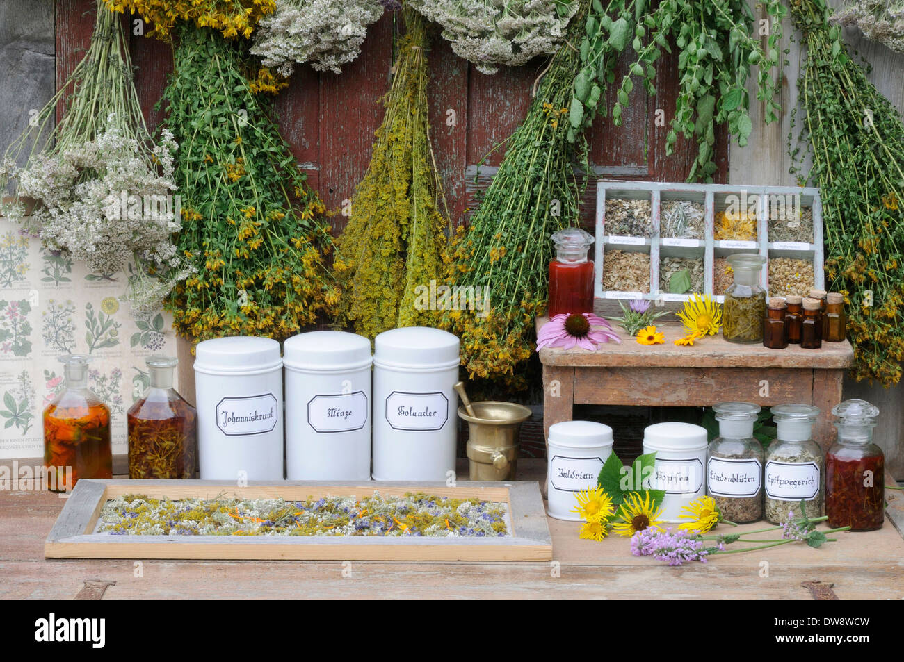 medicinal herbs stockfotos medicinal herbs bilder alamy. Black Bedroom Furniture Sets. Home Design Ideas