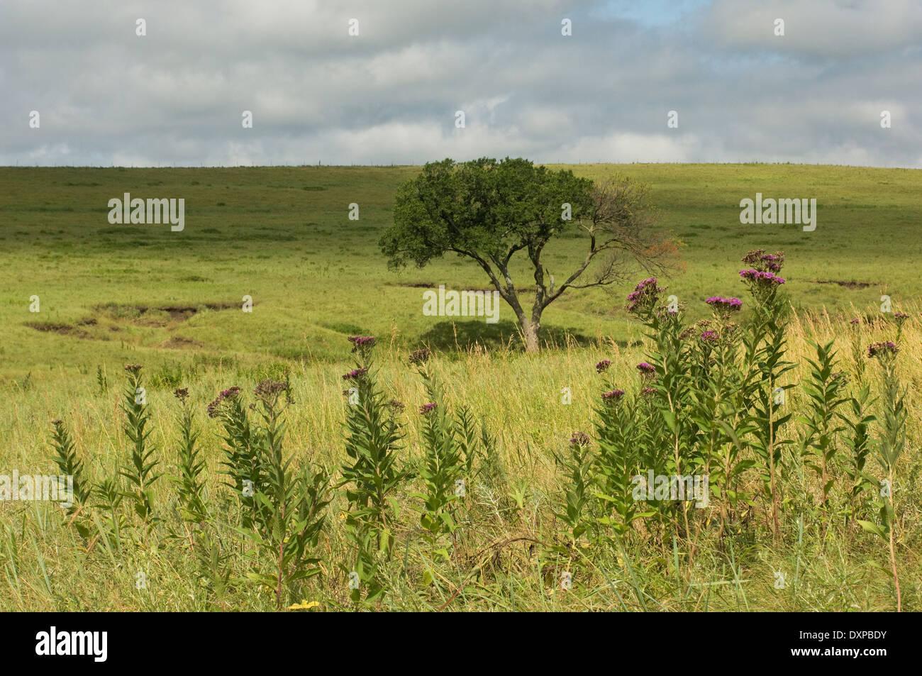 Landschaft von Tallgrass Prairie National Preserve, Kansas. Stockbild