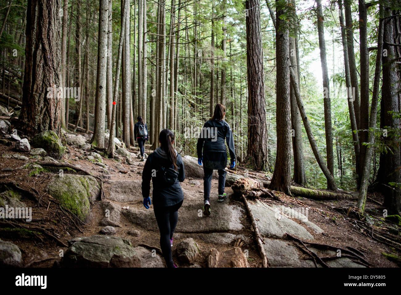 Drei junge weibliche Wanderer im Wald, Squamish, British Columbia, Kanada Stockbild