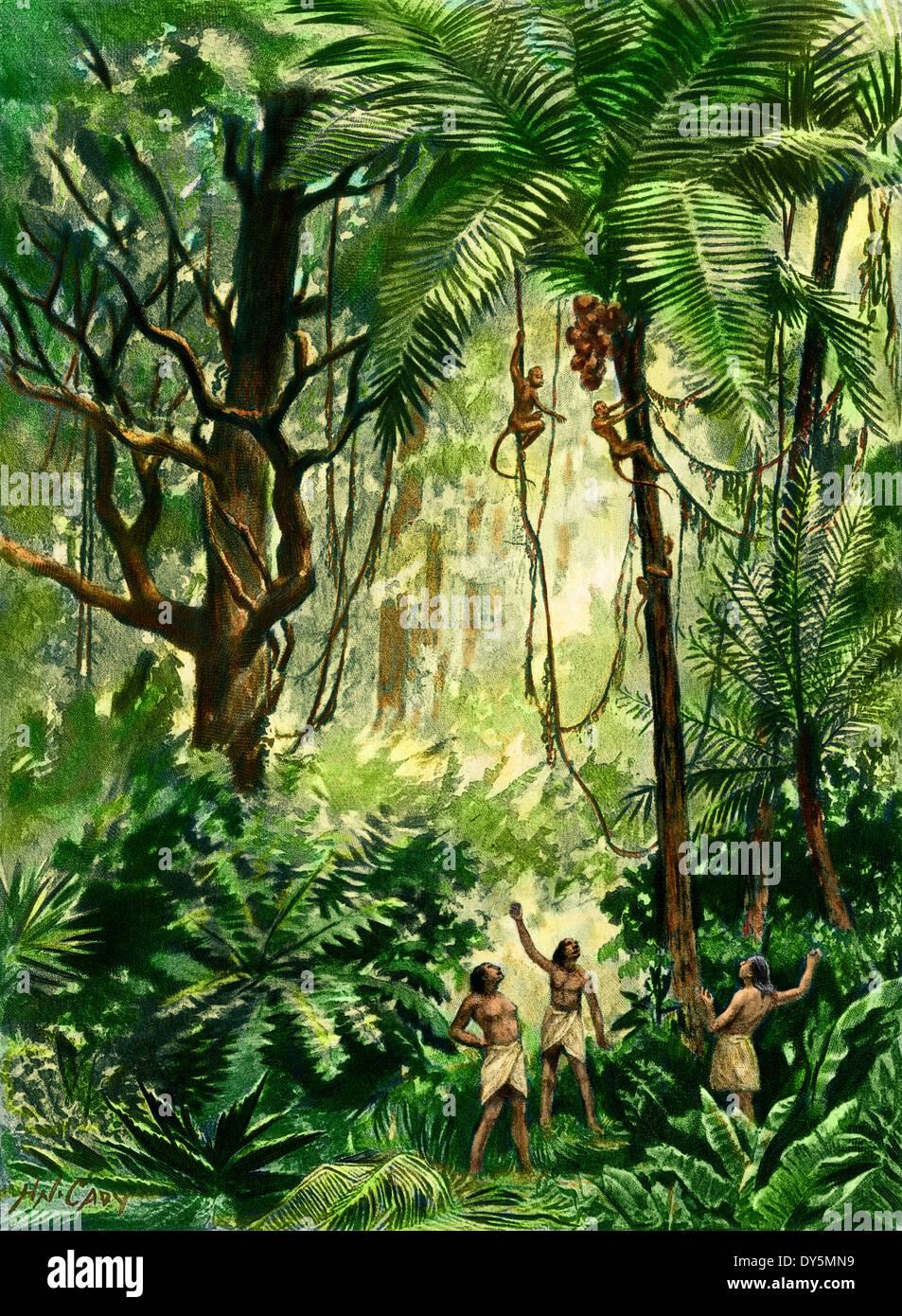 Brasilianischen Eingeborenen werfen von Steinen bei Affen um Muttern zu sammeln, die nach unten geworfen werden. Stockbild