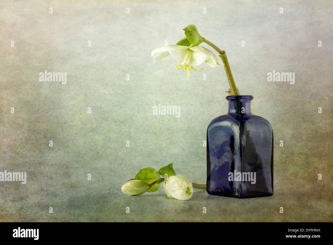 Helleborus und blaue Glasvase mit Textur-overlay Stockbild