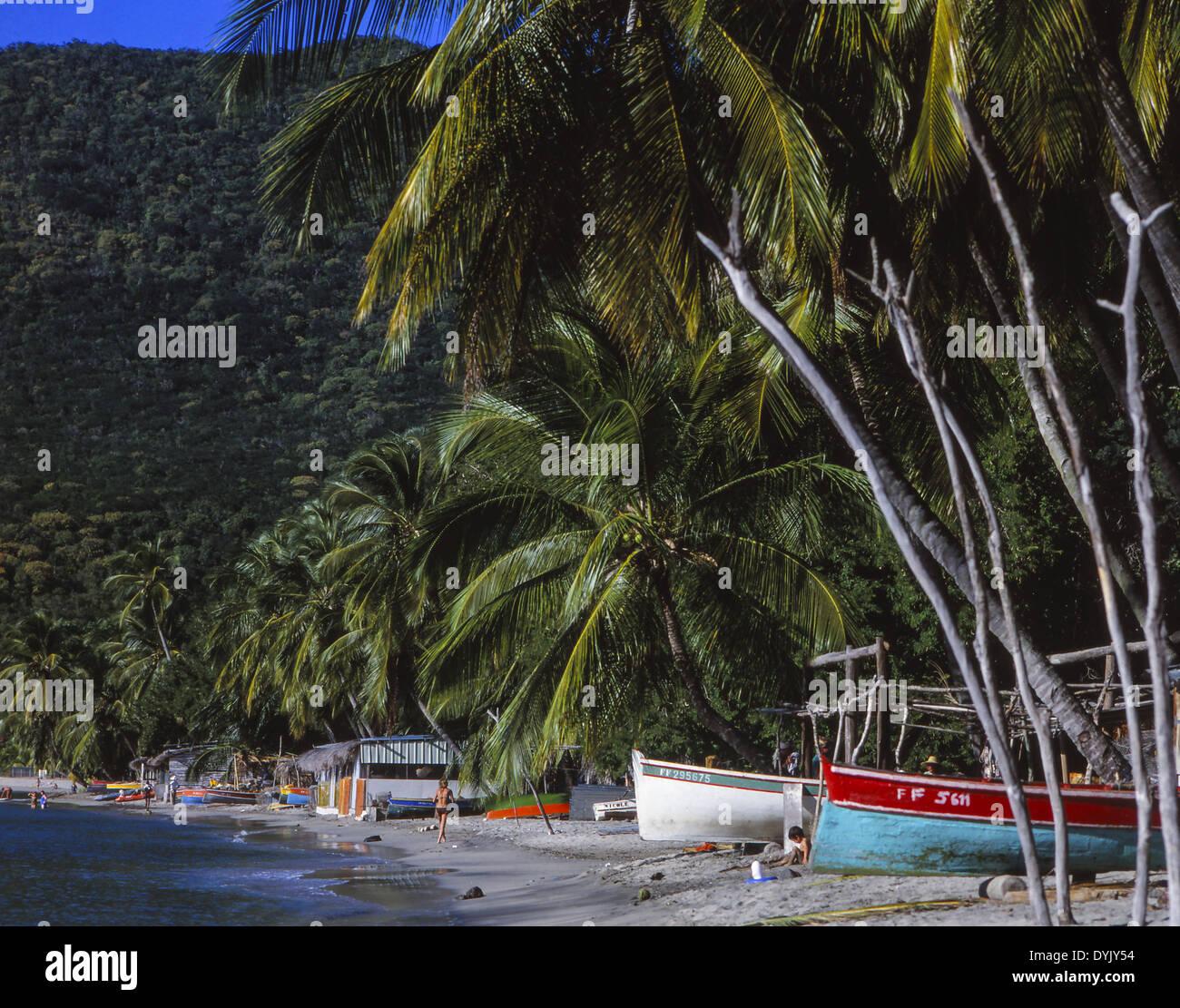 Karibik, Palmenstrand Auf der Insel Martinique Stockbild