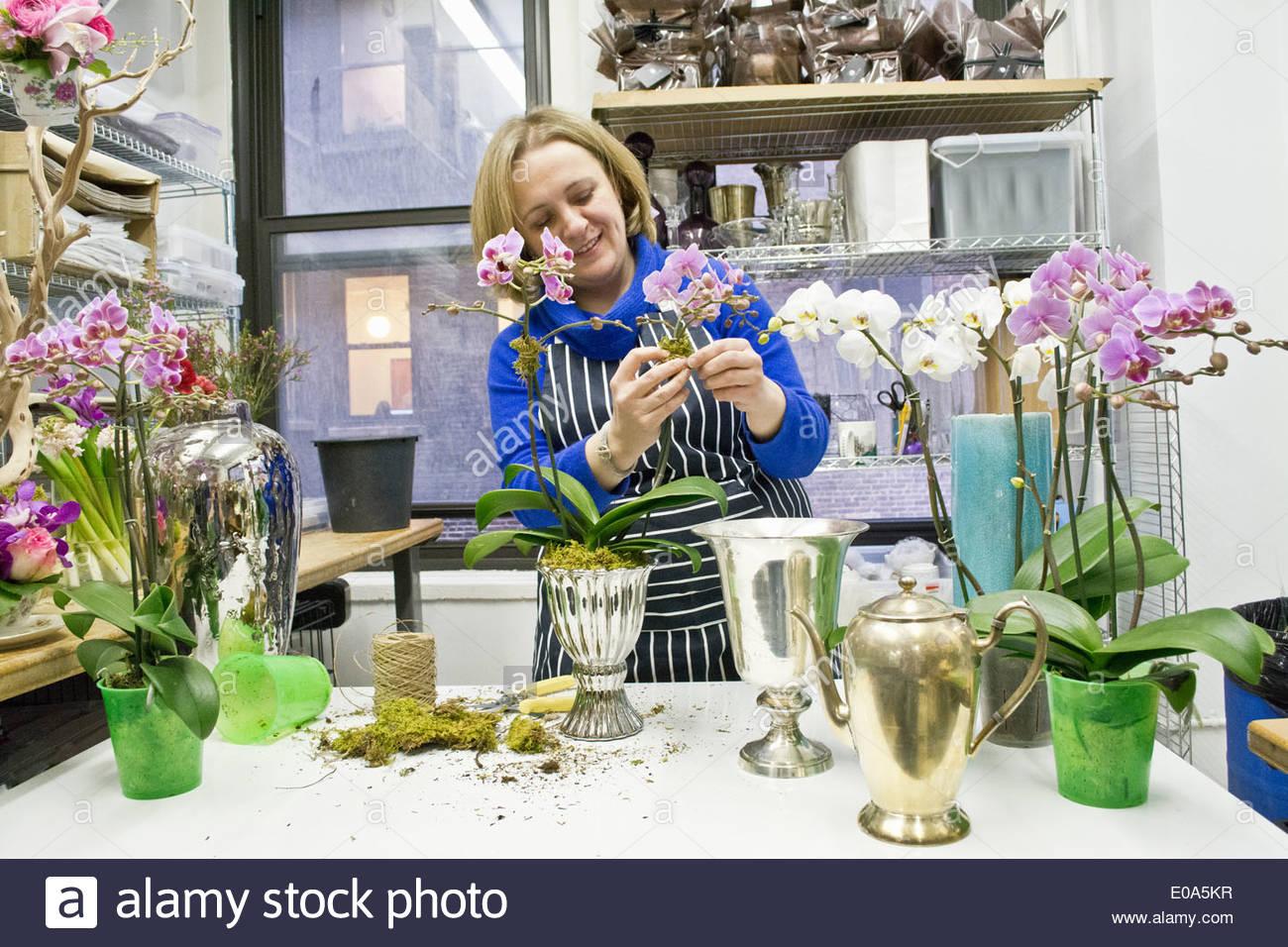 Florist, Vermittlung von Orchideen im studio Stockbild