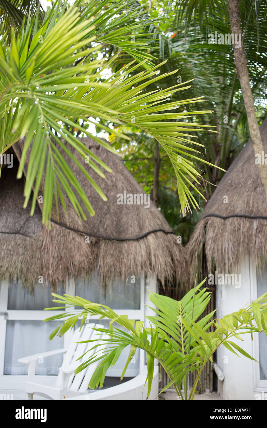 Zwei Hütten verschlungen in Palmen in Tulum, Mexiko Stockbild
