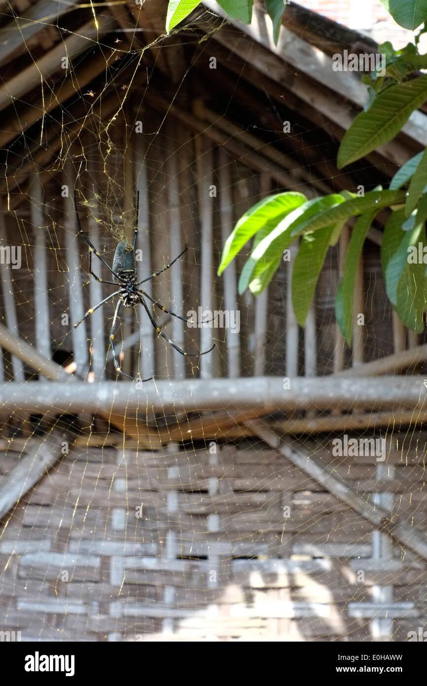 gro e spinnen web auf der seite ein haus mit einer goldenen radnetz spinne in einem l ndlichen. Black Bedroom Furniture Sets. Home Design Ideas