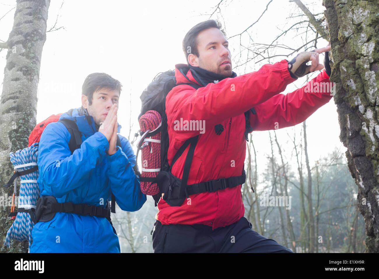 Männliche Wanderer erkunden Baumstamm im Wald Stockbild
