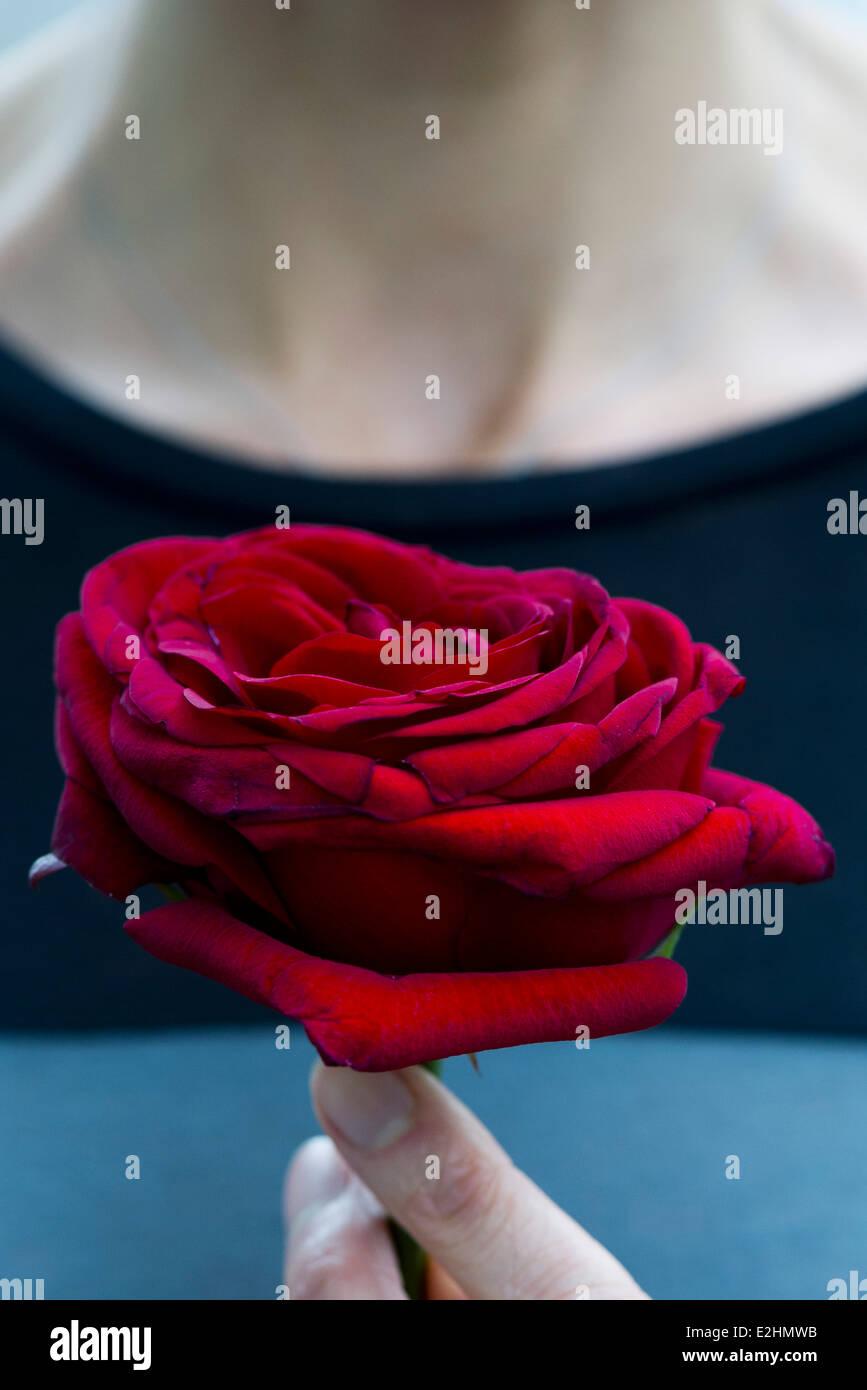 Frau, die einzelne Rose, beschnitten Stockbild