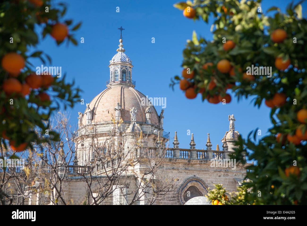 Kathedrale von Jerez Kuppel und Orange Bäume Früchte. Stockbild