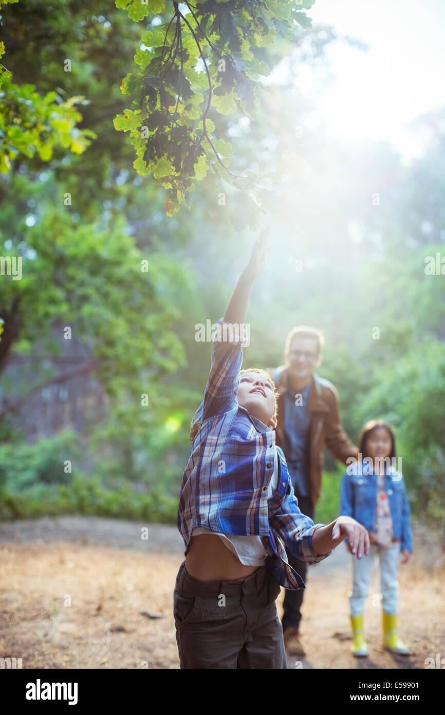 Junge, die glühende Kugel im Wald fangen Stockbild