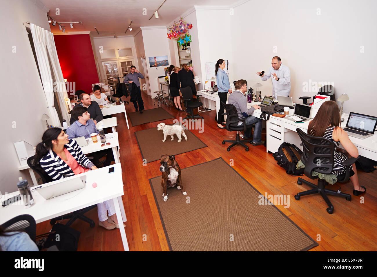 Menschen bei der Arbeit in einem modernen Büro mit Hunden Stockbild