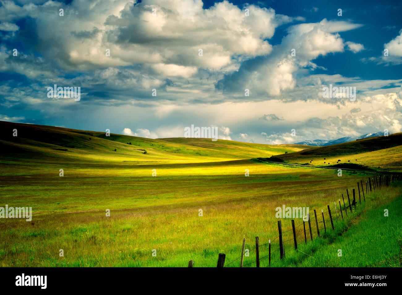 Weide-Wolken und Zaun. Zumwalt Prairie Preserve, Oregon, Kuh, Kühe Stockbild