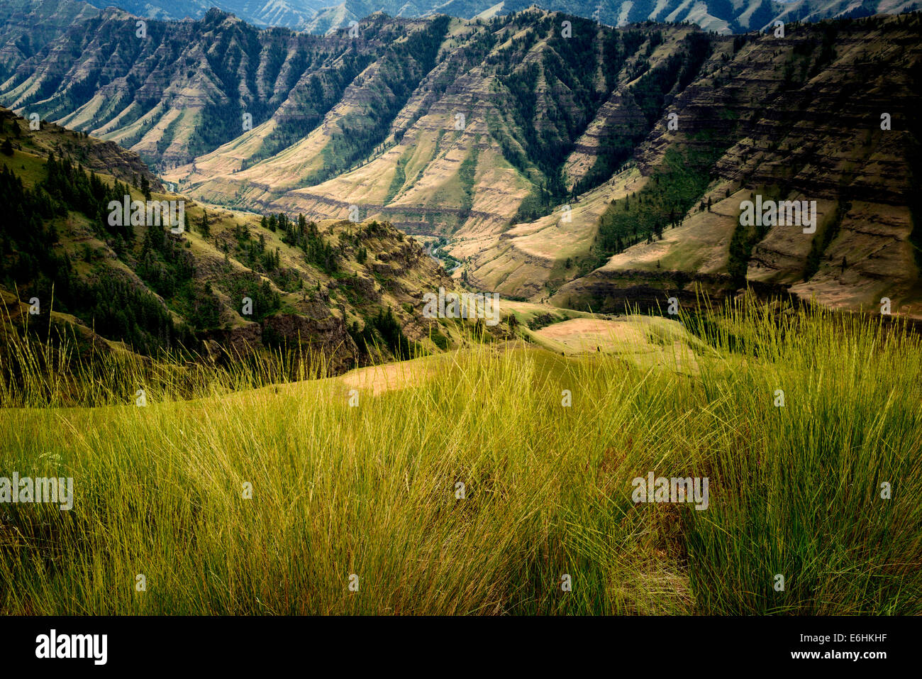 Gräser und Imnaha Canyon. Hells Canyon National Recreation Area, Oregon Stockbild