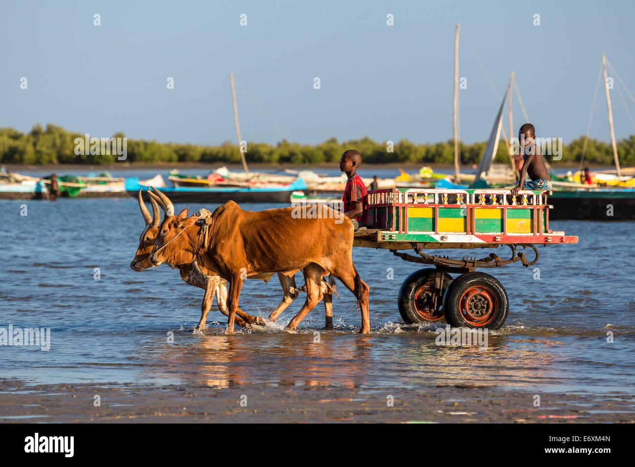 Ochsenkarren am Strand, Tulear, Madagaskar, Afrika Stockbild
