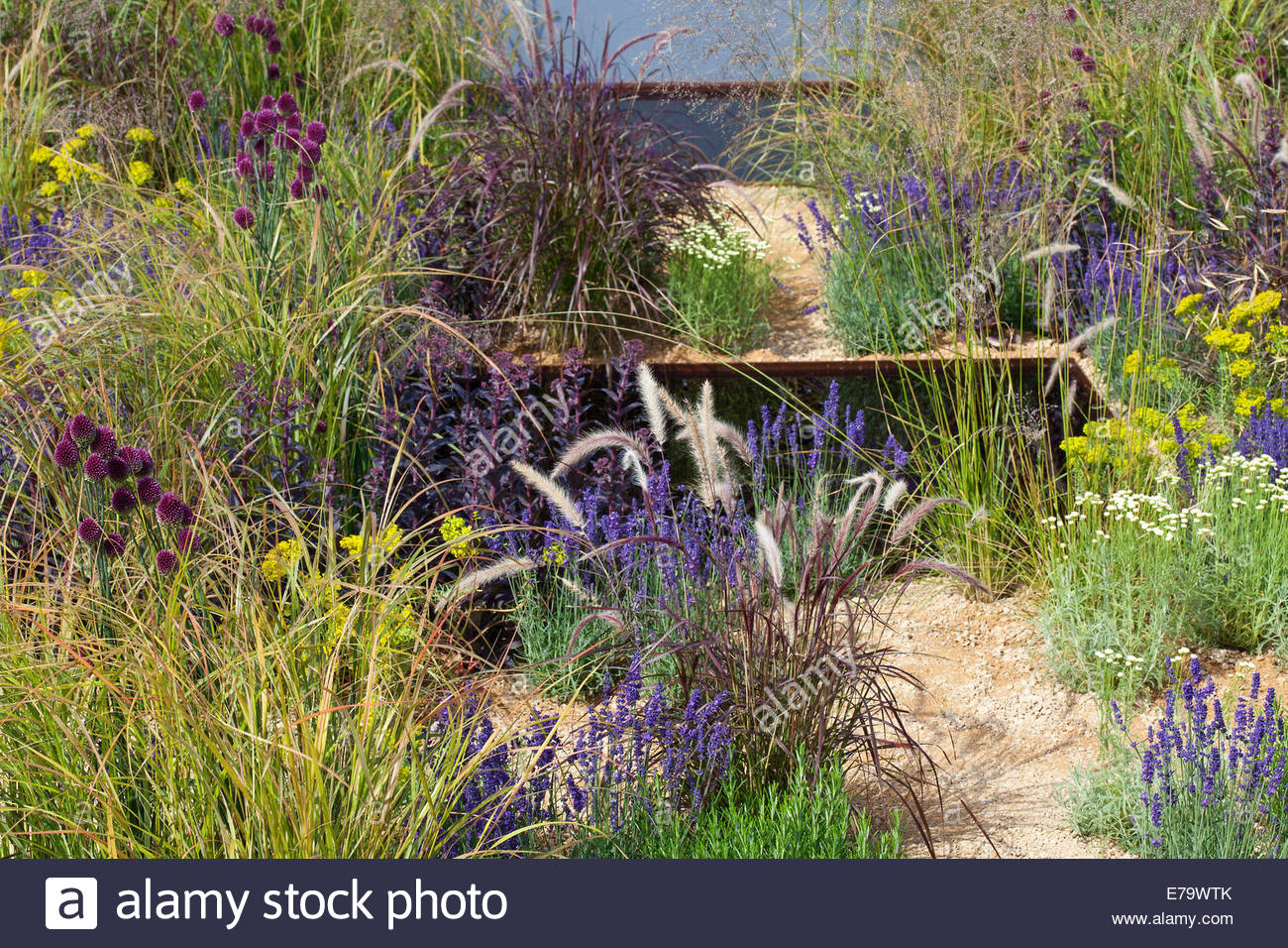 Moderne Garten mit Gräsern, Allium Sphaerocephalon und pool ...