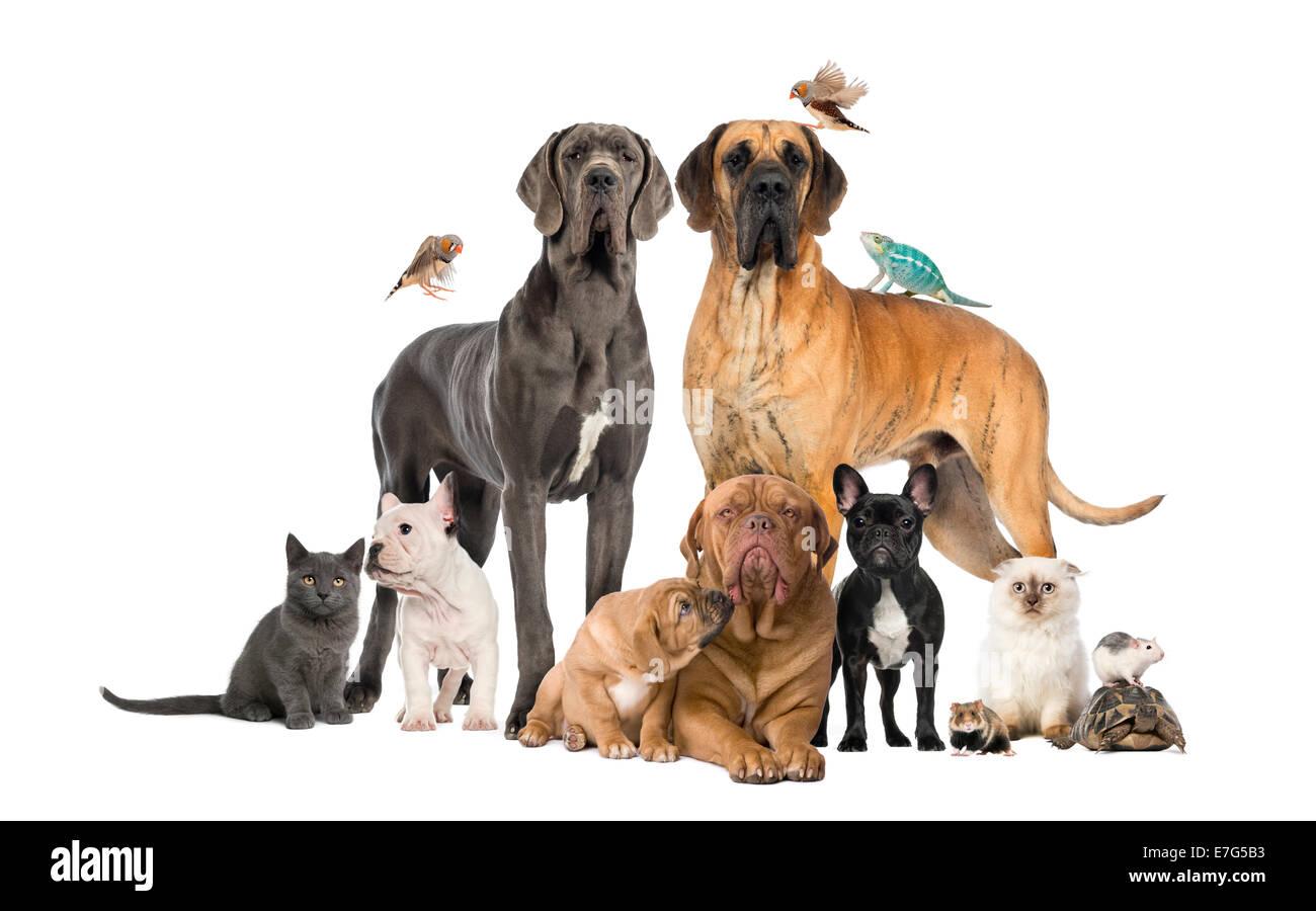 Gruppe von Haustiere - Hund, Katze, Vogel, Reptil, Kaninchen vor weißem Hintergrund Stockbild