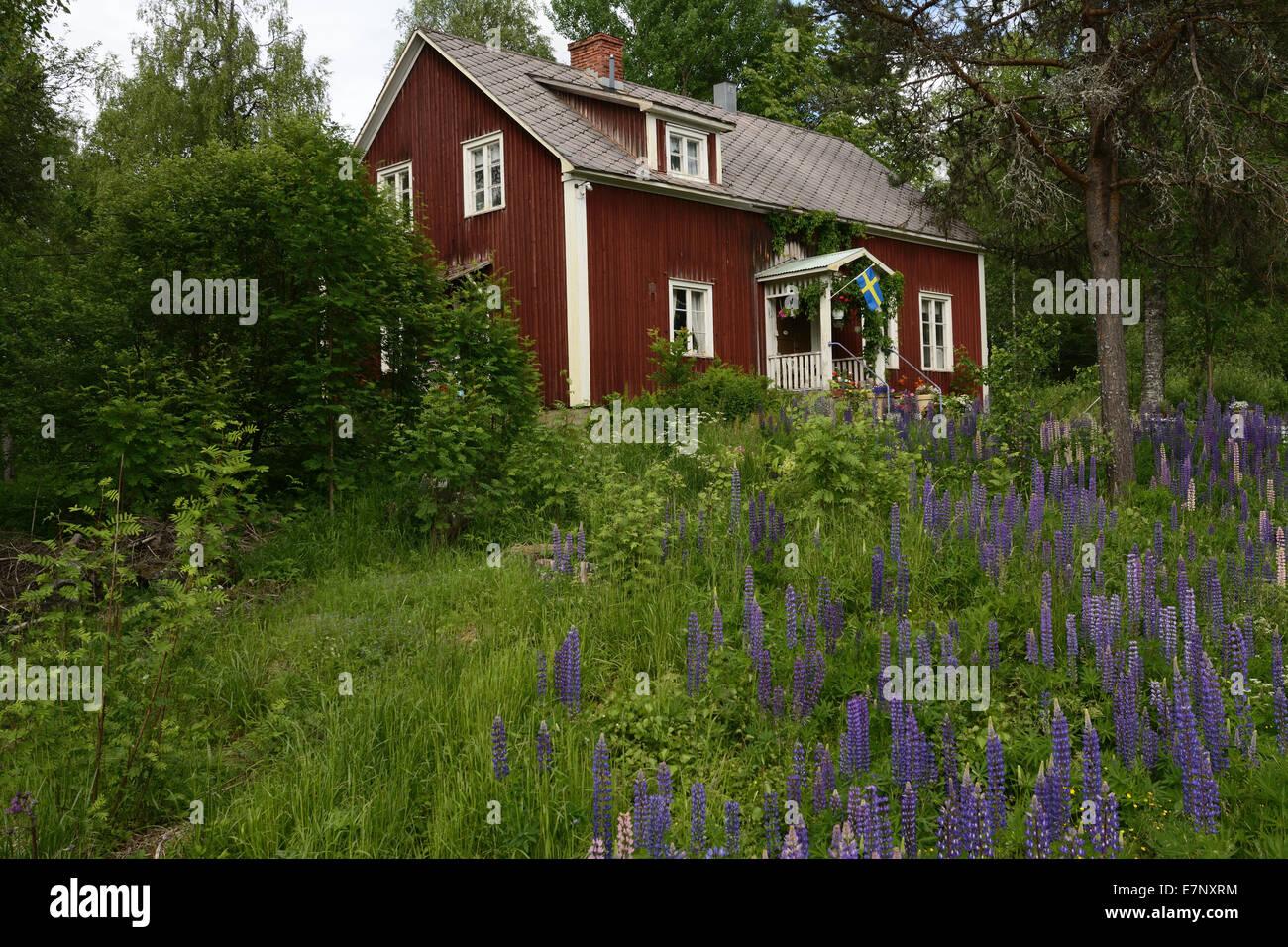 Typisch haus rotes haus garten lupinen m ngen for Norwegen haus