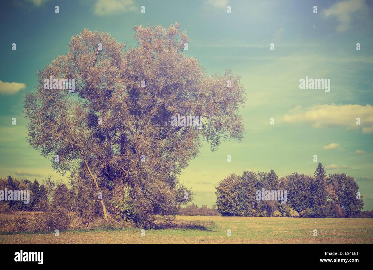 Vintage Bild von Herbst Bereich mit Bäumen, Retro-gefiltert. Stockbild
