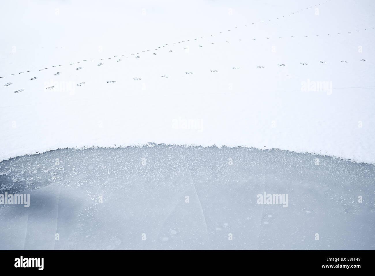 Tierspuren auf gefrorenen Schnee bedeckten See, Colorado, America, USA Stockbild