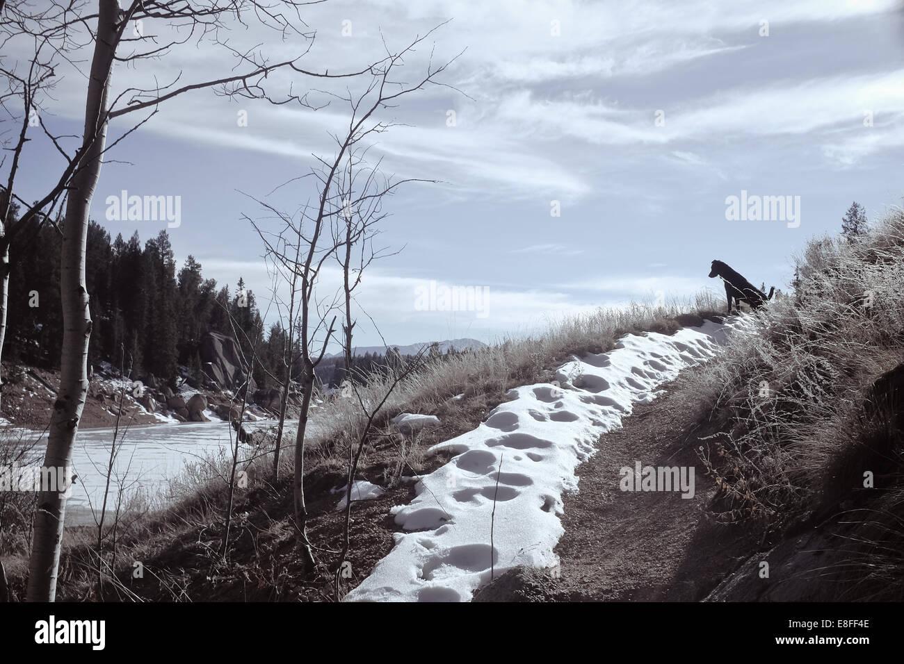 Hundesitting auf Fußweg, Colorado, America, USA Stockbild
