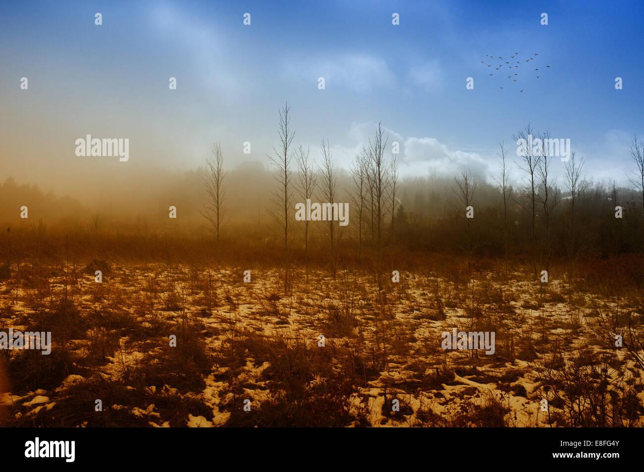 Ländlichen Bereich Landschaft im winter Stockbild