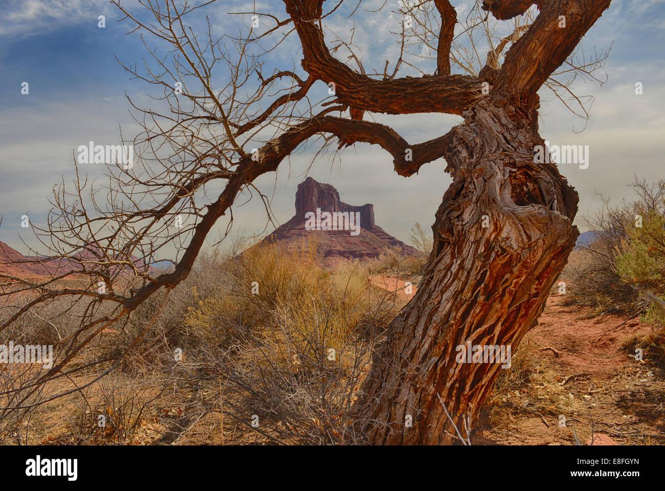 USA, Utah, Moab, knorrigen, Schloss Berg, Baum im Professor Tal Stockbild
