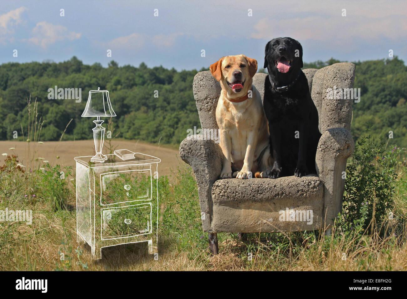 Konzeptbild Hunde sitzen in einem Wohnzimmer Stockbild
