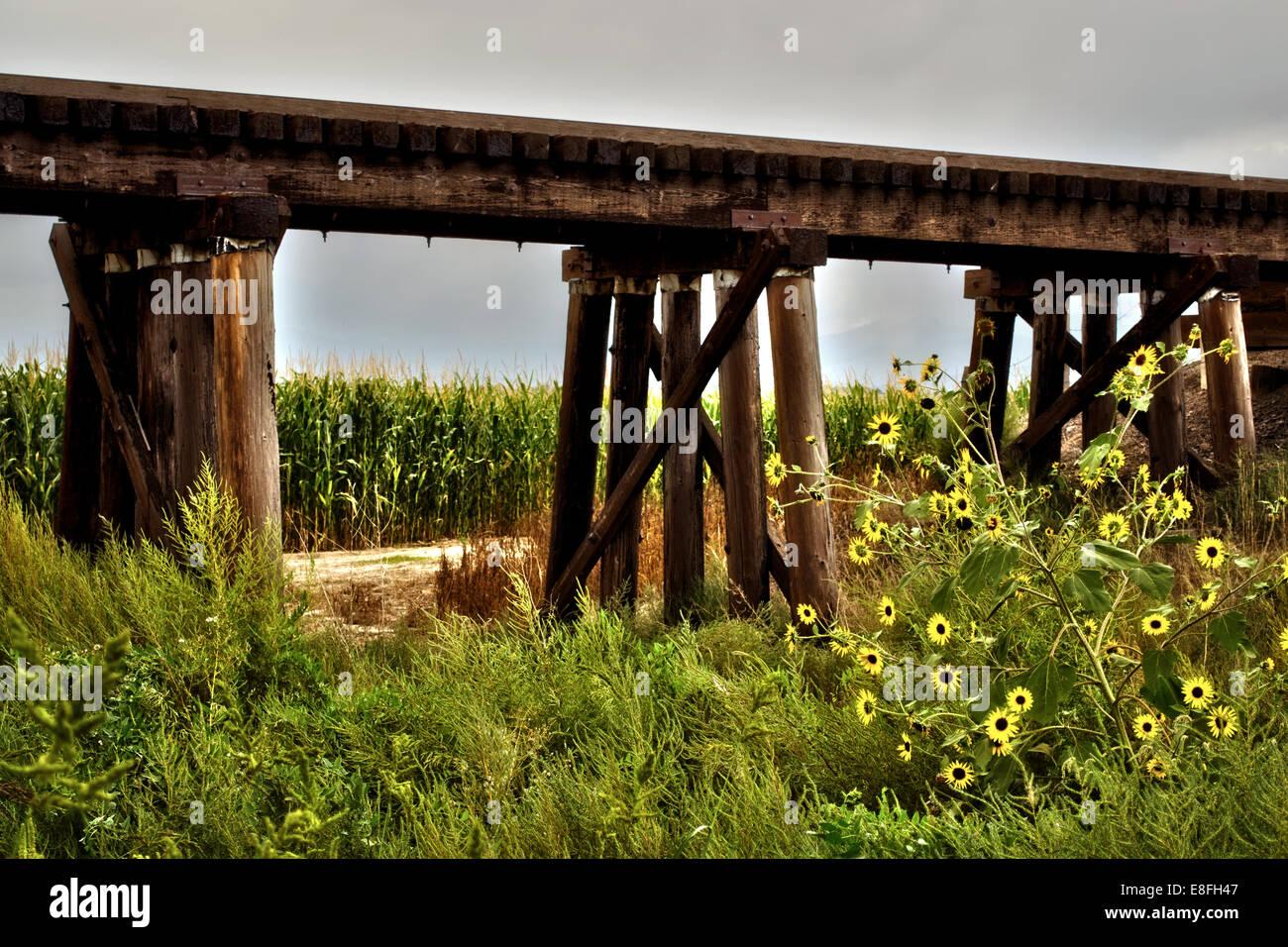 Ländliche Zug Bock umgeben von Mais und Wildblumen Stockbild