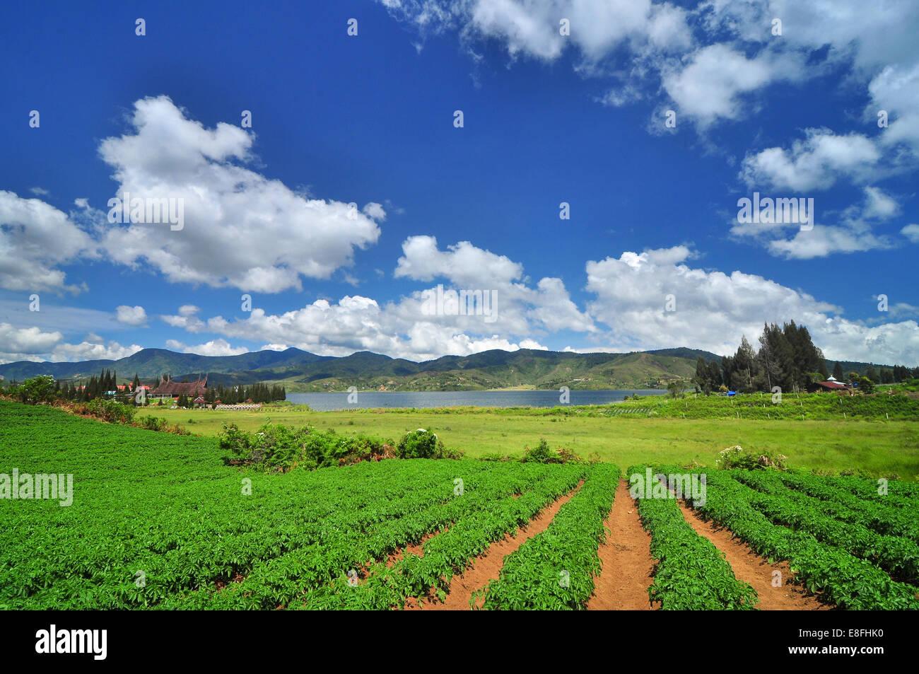 Indonesien, West-Sumatra, Solok, Alahan Panjang, Wolken über Feld Stockbild