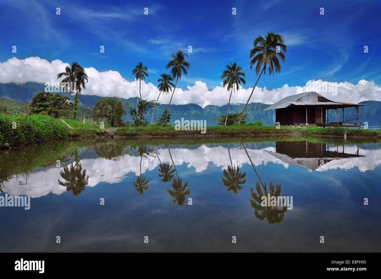 Indonesien, Padang, Maninjau Seengebiet, Reflexion der Palmen Stockbild