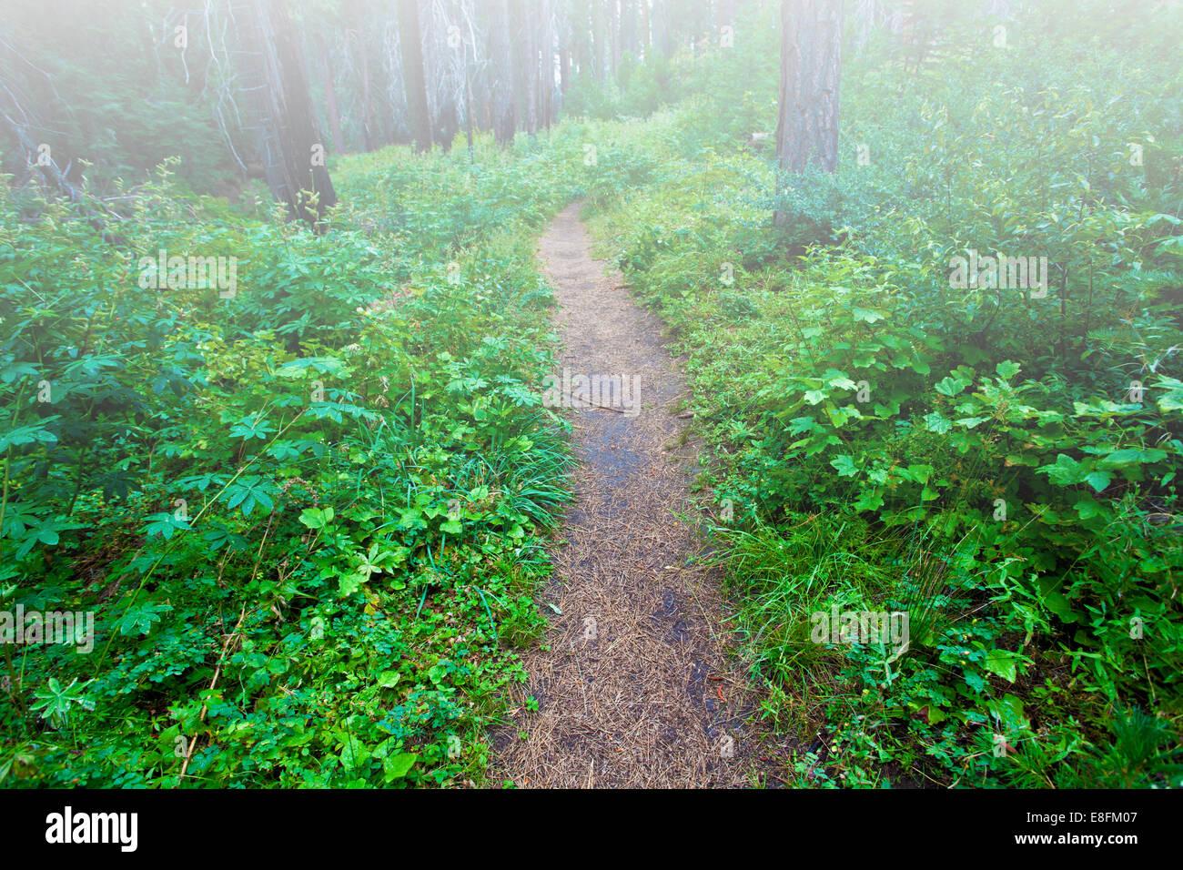 Durch nebligen Wald verfolgen Stockbild